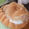 イクメン猫ダイちゃんと、父のチチ。