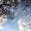 今 日 の 空