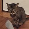 【愛猫】慢性腎不全ステージ4と診断されてから約5ヶ月経ちました【回復】