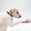 セラピー犬のいる病院がもっと増えてほしい!