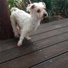 犬のワンワン