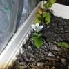 クサイチゴ(草苺)の花が咲いた