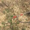 灌漑用の水ポンプ(ディーゼルエンジン)と1tプラスチックタンクの準備状況
