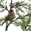 六甲山森林植物園のあじさいと野鳥
