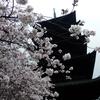 4月の京都に熱を出しながら花見をしに行った件(東寺編)