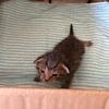 準ワンオペ育児+子猫の世話による激動の日々
