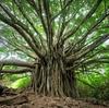 形態素解析曰くツイッタラーの日本語は度し難く、決定木曰くエンジニアは「好き」って表明をあんまりしないらしい話