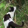 6月5日 荒川土手の猫さまたち