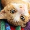 猫好きカップルなら2017年2月22日は猫の日デートで決まりです!!
