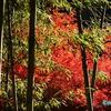 廃線のトンネルと紅葉(その1) ― 愛岐トンネル群の竹林と紅葉 ―