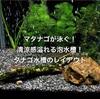 マタナゴが泳ぐ!清涼感溢れる泡水槽!タナゴ水槽のレイアウト