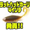 【イマカツ】人気ギル型ワームのサイズアップモデル「フラットヘッドカーリー4インチ」発売!