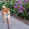 犬がいなくなったら、、、歩かなくなるだろうな