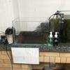 世界水草レイアウトコンテスト2019 出品水槽の立ち上げ