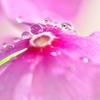 光と水滴 | LEICA MACRO 45mm