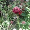 心も喜ぶ小さな花
