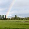 虹を見た時に今日はラッキー!良い日だったと感じますか?