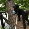 ハルは、おだてずとも木に登る・・・💦
