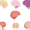【脳活性】芸術療法(アートセラピー)の認知症への影響は!?