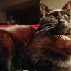 今日の黒猫モモ&白黒猫ナナの動画ー1028