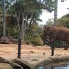 留学中に行くべき!シドニー最大のタロンガ動物園に行ってみた!その3