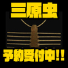 【イマカツ】エビのホバリングアクションに特化したワーム「三原虫」次回出荷分予約受付中!