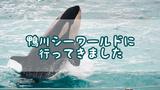 シャチに会いたい!鴨川シーワールドに行ってきました!!