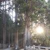高野山の奥の院に行ってきました。