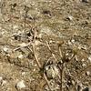 幼木に肥料を…!