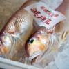 2020年7月22日 小浜漁港 お魚情報