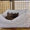 猫のベッドを考察する:導入編 【100円ショップの手作りベッド】