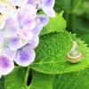 紫陽花が似合う雨が良い