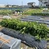 【雑記】ご近所の家庭菜園へGO!ソーラーシェアリングの道開ける?