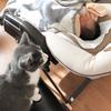 【雑談】十人十色ならぬ十ニャン十色【猫と娘】