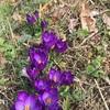 春 来ました
