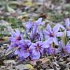 落ち葉と紫の花