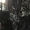 猫用ケージを購入しました!
