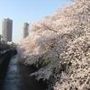 桜も散って,梅雨が来て,夏が来ますね.