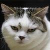 ブルゾンちえみに似た猫