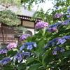 【鎌倉いいね】あじさいもそろそろ見納めの鎌倉を歩く(6月18日)