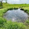 アクアプラザ遊水地の湧水池(静岡県沼津)