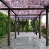 大垣市『赤坂スポーツ公園』にある全長840メートルの藤棚。