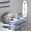 シャムミックス男子猫の癒し力