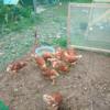 鳥小屋の現状