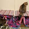 猫も張り切って冬支度!