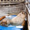 豊橋「のんほいパーク」で仲良くふれあう動物たちを激写してきた