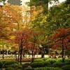 【オールドレンズ】紅葉・日比谷公園【α7II, PO3-3M】