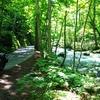 人生で一度は訪れてほしい幻想的な十和田湖と奥入瀬渓流