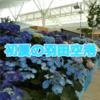 羽田空港観察記 ~May 2019 (紫陽花)~