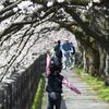富山県でお勧めの桜風景